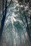 Nebelhafter, ehrfürchtiger Wald, viele Bäume Lizenzfreie Stockfotografie