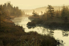 Nebelhafter Fluss und Kiefern am frühen Morgen beleuchten Lizenzfreie Stockfotos