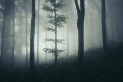 Nebelhafter frequentierter Wald mit surrealem Licht lizenzfreie stockfotos