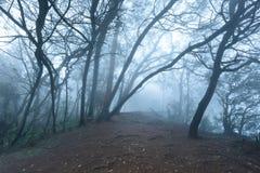 Nebelhafter furchtsamer Wald im Nebel Lizenzfreies Stockfoto