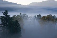 Nebelhafter Gebirgsmorgen Stockfotografie