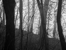 Nebelhafter, gespenstischer Schwarzweiss-Wald Lizenzfreie Stockfotos