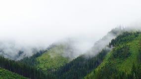 Nebelhafter grüner Wald Lizenzfreie Stockfotos