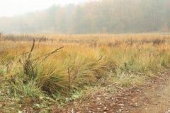 Nebelhafter Herbst stockfotos