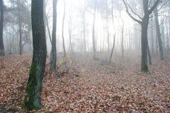 Nebelhafter Herbstmorgen Lizenzfreie Stockfotografie