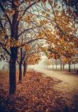Nebelhafter Herbstpark morgens Lizenzfreie Stockbilder
