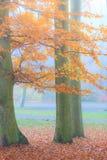 Nebelhafter Herbstpark am nebeligen Tag Stockbilder