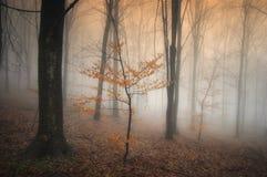 Nebelhafter Herbstwald mit buntem Baum Stockfotografie
