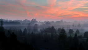 Nebelhafter Morgen über dem Wald Stockfotos