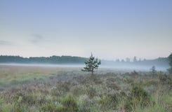 Nebelhafter Morgen über Waldwiese lizenzfreie stockfotos