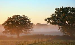 Nebelhafter Morgen Stockbild