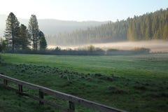 Nebelhafter Morgen Lizenzfreies Stockbild