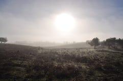 Nebelhafter Morgen in Alentejo Lizenzfreie Stockfotografie