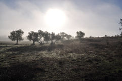 Nebelhafter Morgen in Alentejo Stockbild