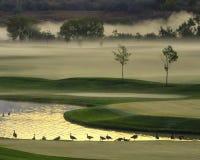 Nebelhafter Morgen auf dem Golfplatz Stockfoto