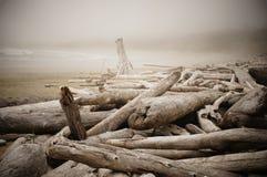 Nebelhafter Morgen auf einem Treibholz-gefüllten Strand nahe Tofino, Kanada Stockbilder