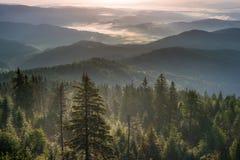 Nebelhafter Morgen in den Bergen Stockfotos