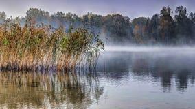 Nebelhafter Morgen des Herbstes Stockfotos