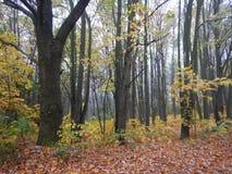 Nebelhafter Morgen in einer Herbstnatur Stockbild