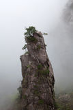 Nebelhafter Morgen in Huangshan-Berg, China Stockbilder