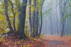 Nebelhafter Morgen im Herbstwald lizenzfreies stockbild
