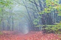 Nebelhafter Morgen im Herbstwald lizenzfreie stockfotos