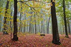 Nebelhafter Morgen im Herbstwald stockfotos