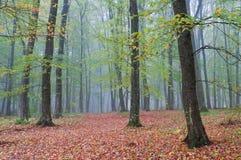 Nebelhafter Morgen im Herbstwald lizenzfreie stockfotografie