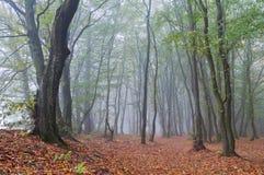 Nebelhafter Morgen im Herbstwald stockbilder