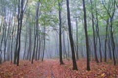 Nebelhafter Morgen im Herbstwald lizenzfreie stockbilder