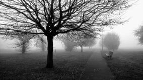 Nebelhafter Morgen im Park Stockfotos