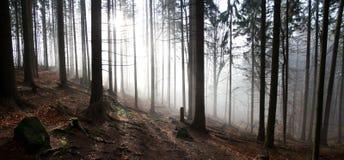 Nebelhafter Morgen im Wald Stockbild