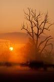 Nebelhafter Morgen mit Bäumen im Schattenbild Lizenzfreie Stockbilder