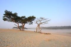 Nebelhafter Morgen mit Sonne Lizenzfreies Stockfoto