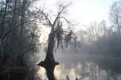 Nebelhafter Morgen - Okefenokee Sumpf - Georgia stockfotos