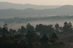 Nebelhafter Nebel des erstaunlichen Morgens mit Schattenbildbäumen in Thailand stockfotos
