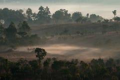 Nebelhafter Nebel des erstaunlichen Morgens mit Schattenbildbäumen in Thailand stockbild