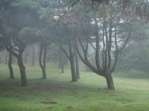 Nebelhafter Regenwald im Madeira Stockbild