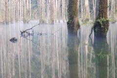Nebelhafter See. Stockfoto