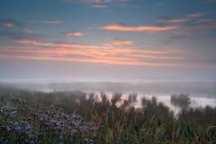 Nebelhafter Sonnenaufgang über nassem Sumpf Stockfotos