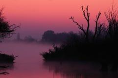 Nebelhafter Sonnenaufgang (Stimmung) stockfotos