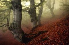Nebelhafter Tag in einem alten Kastanienwald der Jahrhunderte stockbilder