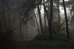 Nebelhafter Tag im Holz, Stockbilder