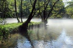Nebelhafter Tag am Park nahe dem Fluss Stockbild