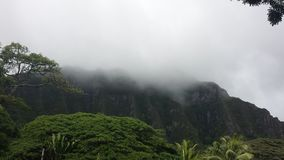 Nebelhafter tropischer Berg Stockfoto