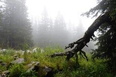 Nebelhafter und mysteri?ser Wald der Berg ?Zyuratkul ?Ural Herbst stockfotografie