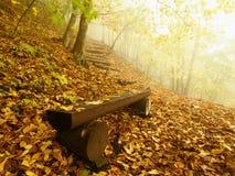 Nebelhafter und sonniger Tagesanbruch des Herbstes am Buchenwald, alte verlassene Bank unter Bäumen Nebel zwischen Buchenniederla Stockfotografie
