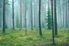 Nebelhafter Wald Stockfoto