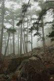 Nebelhafter Wald Stockfotografie