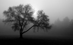 Nebelhafter Wald Lizenzfreie Stockfotos